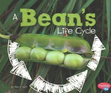 A-Bean-s-Life-Cycle
